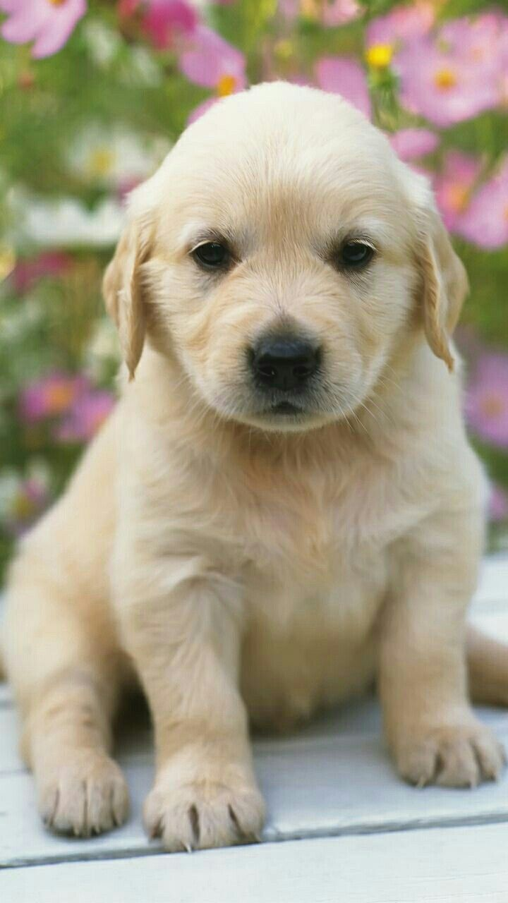 Dog Wallpapers Are Added Beautiful And Cute Dogs For Your Mobile Phone Follow Us On Facebook For More Beautiful Wallpapers Cu Cute Dogs Dog Wallpaper Dogs