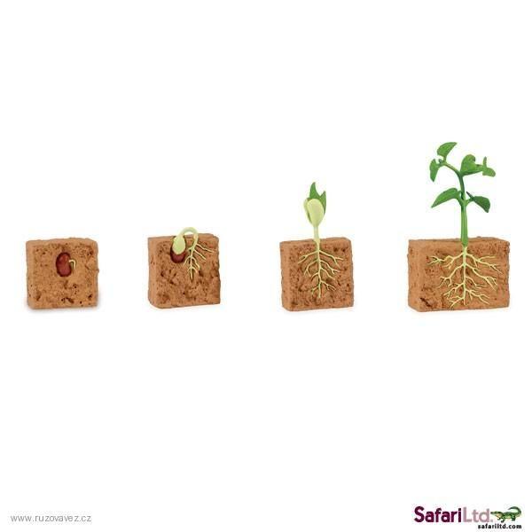Příroda | Životní cyklus - zelená fazole | Růžová věž - Montessori a domácí vzdělávání