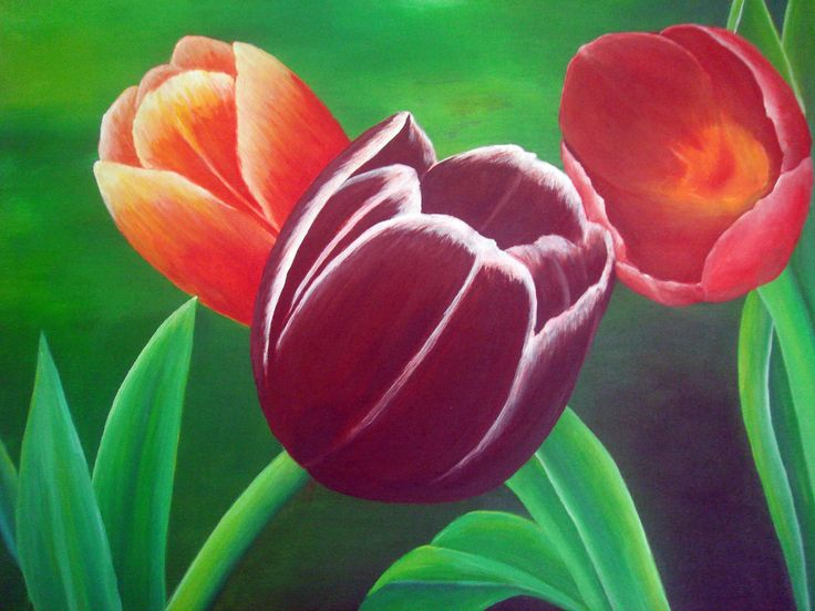 Tulip, Acrylic on canvas, 60cm x 50cm, Artist : Aliyas
