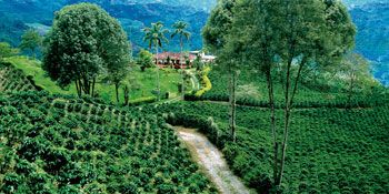 Colombian Cultural coffee landscape.  World heritage by UNESCO. http://whc.unesco.org/en/list/1121