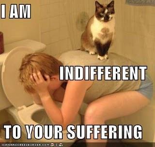 kills me.  oh cats.
