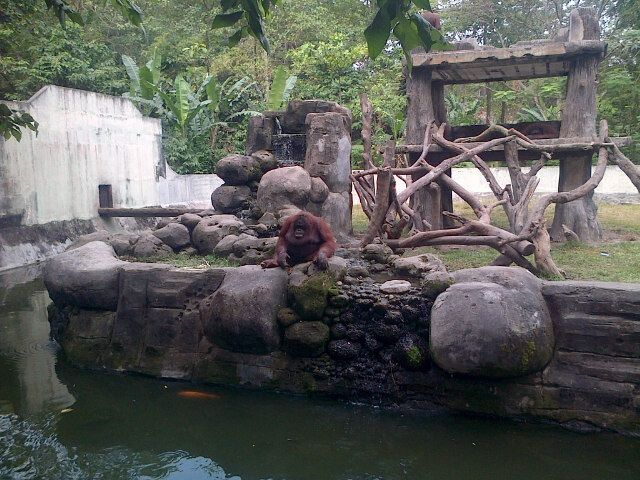 Kebun Binatang Gembira Loka di Yogyakarta, DI Yogyakarta