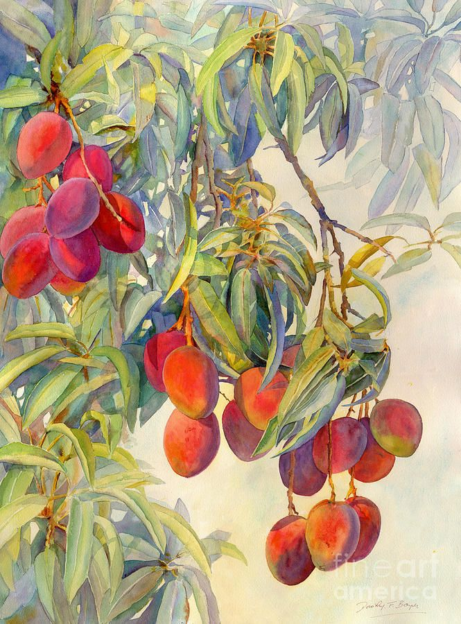 Mango Tree Painting