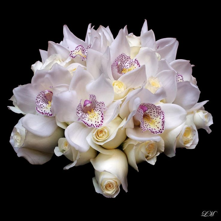 White Orchids And Roses Bouquet Still Life Flower Art Poster Photograph
