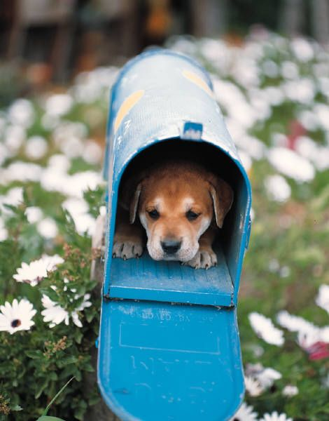 you've got mail: Cat, New Puppys, Doggies, Pet, You'V Got Mail, Dogs Pictures, Mailbox Dogs, Special Delivery, Adorable Animal