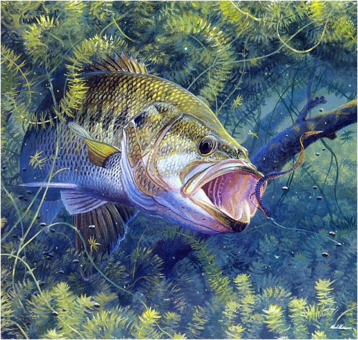 312 best bass fishing images on pinterest bass fishing for Bass fish painting