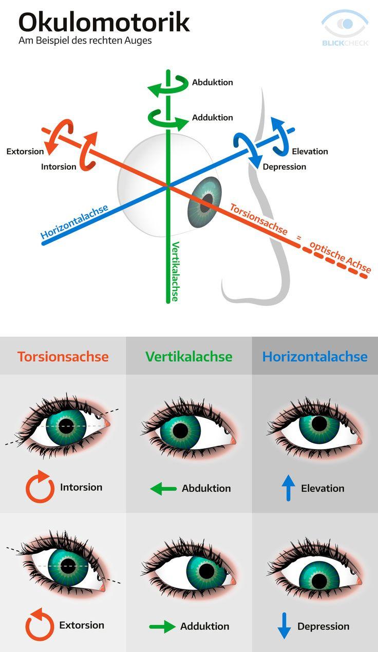 Okulomotorik (Augenbewegung) am Beipiel des rechten Auges.