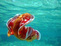 LIFE | ♣ Журнал о путешествиях ♣ Испанский танцор Подводный мир