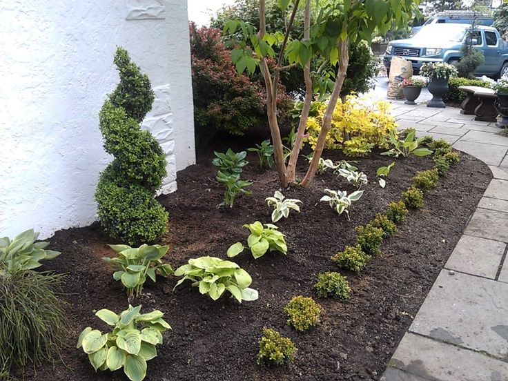 Nice small evergreen trees for landscaping small for Small evergreen trees for small gardens