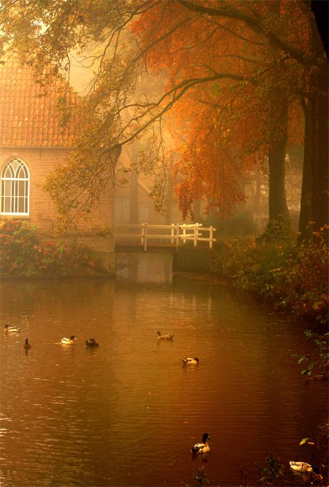 Photo: Roos Gast   Een dromerige mistige ochtend in de buurt van Fleringen #naturephotography #photography #nature #natuur #sprookjesachtig #fotografie #landschap #Nederland #mooie_foto