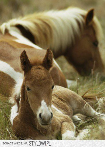 Mother with foal - so sweet! :)