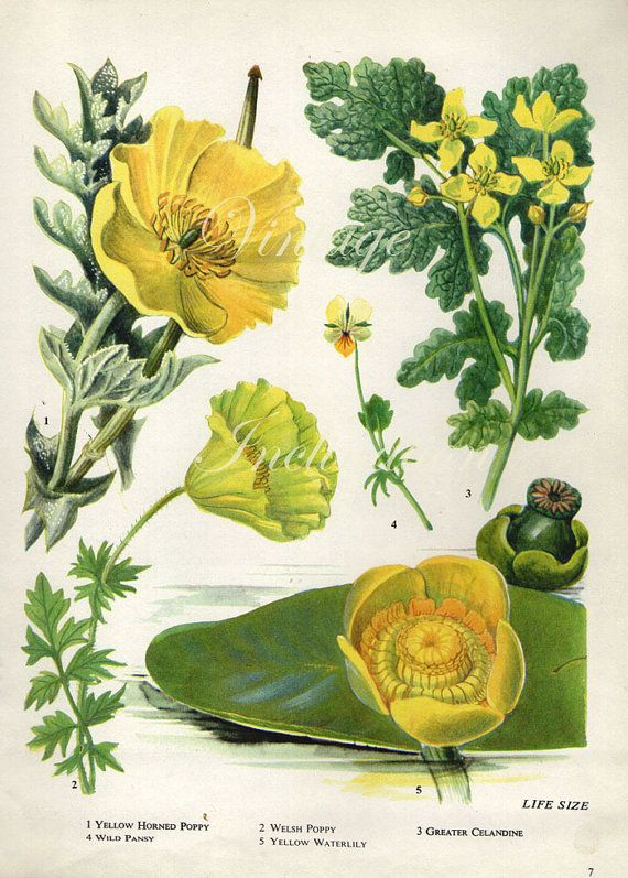 Vintage Botanical Print Antique FLOWERS by VintageInclination, $12.98