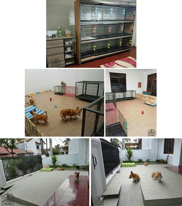Lupercus Dog House, Penitipan Anjing di Bandung - Servis dan Jasa Lainnya - AnjingKita.Com