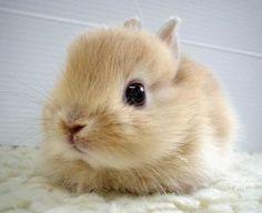 voici un petit lapin