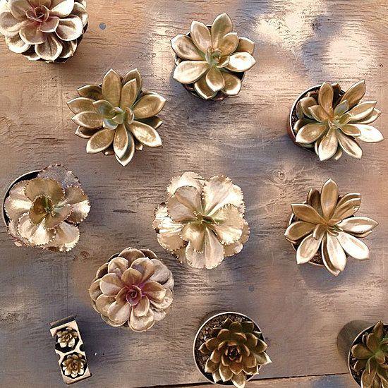 Metallic succulents