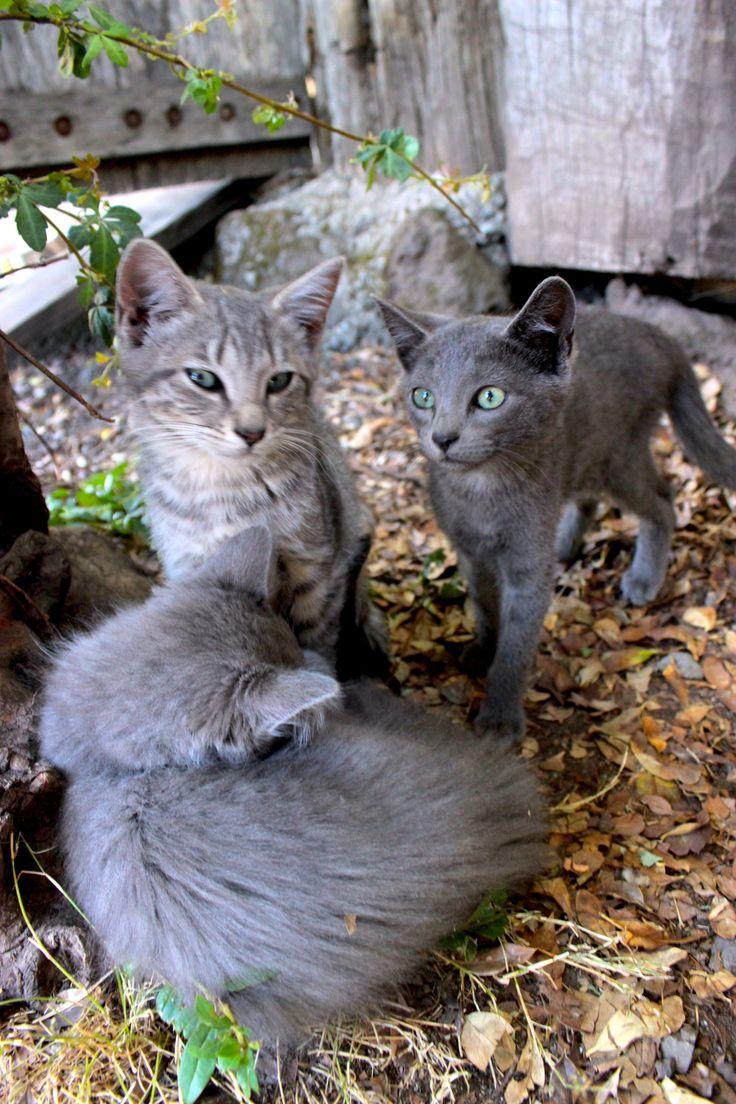 Gatos escala de grises Melipeuco by kor