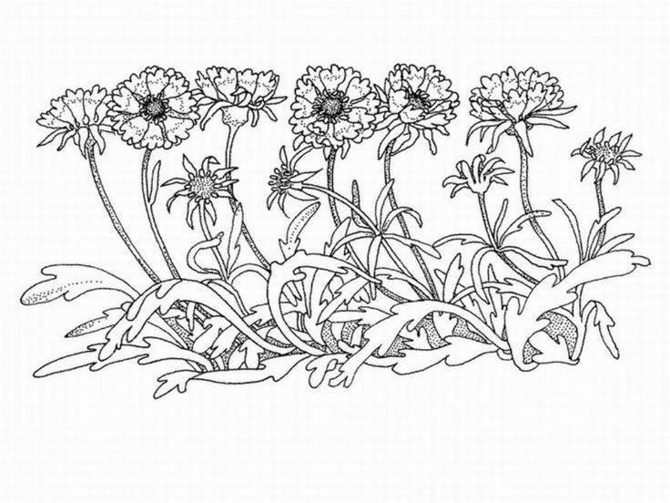 76 best Coloring/Embroidery Pages - Fashion images on ...