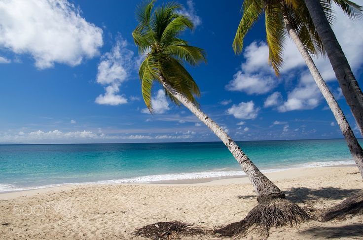 "Tropical Sandy Beach - Tropical Sandy Beach with Palms on Caribbean Island. From ""Caribbean"" photo and video collection."