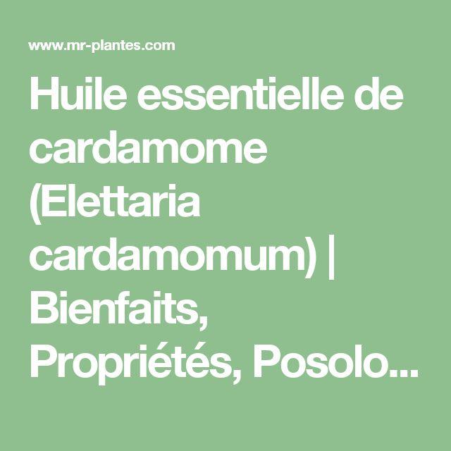Huile essentielle de cardamome (Elettaria cardamomum) | Bienfaits, Propriétés, Posologie, Effets Secondaires