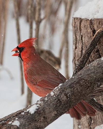 611 Best Arizona Cardinals Images On Pinterest Cardinals