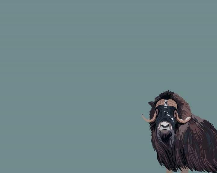 Årskort - Katalog | Zoologisk Have