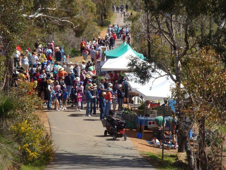 Annual Zig Zag festival Gooseberry Hill