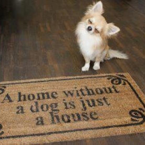 Wauzi sein zu Hause ist sooooo... schön! ☺