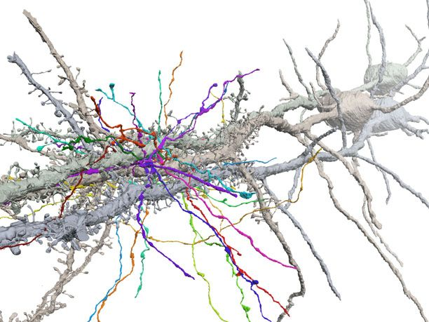 Brain Forest | Connectome: How the Brain's Wiring Makes Us Who We Are
