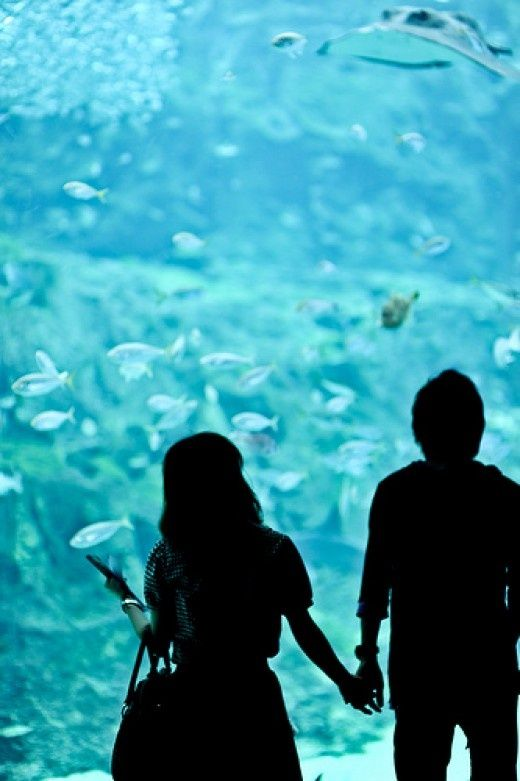 Top 10 Aquarium Fish - Online Dating Site