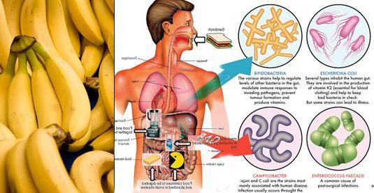 Jeżeli zaobserwowaliście takie symptomy: - ogólne osłabienie, - utrata masy ciała, - stany depresyjne, - trata masy mięśniowej, - skurcze brzucha, - biegunka, - wzdęcia brzucha, - zmiany w stolcu. Spróbuj usunąć powyższe objawyw sposób naturalny: Bardzo prawdopodobne, że masz problemy z układem trawiennym. Źle zakwaszony żołądek, nieprawidłowa flora bakteryjna oraz degradacja kosmków jelitowych prowadzi…
