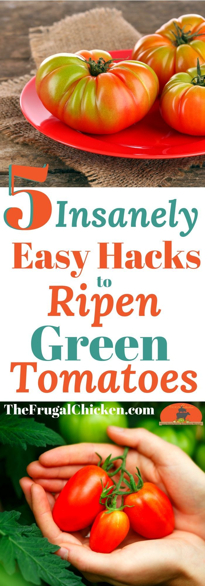 Looking at buckets of green tomatoes (but really yearn for fresh homemade tomato sauce)? Here's 5 insanely easy hacks to get those suckers to ripen!