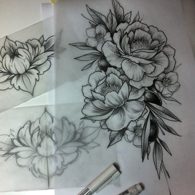 Peony Line Drawing Tattoo : Peony tattoo drawing pixshark images galleries