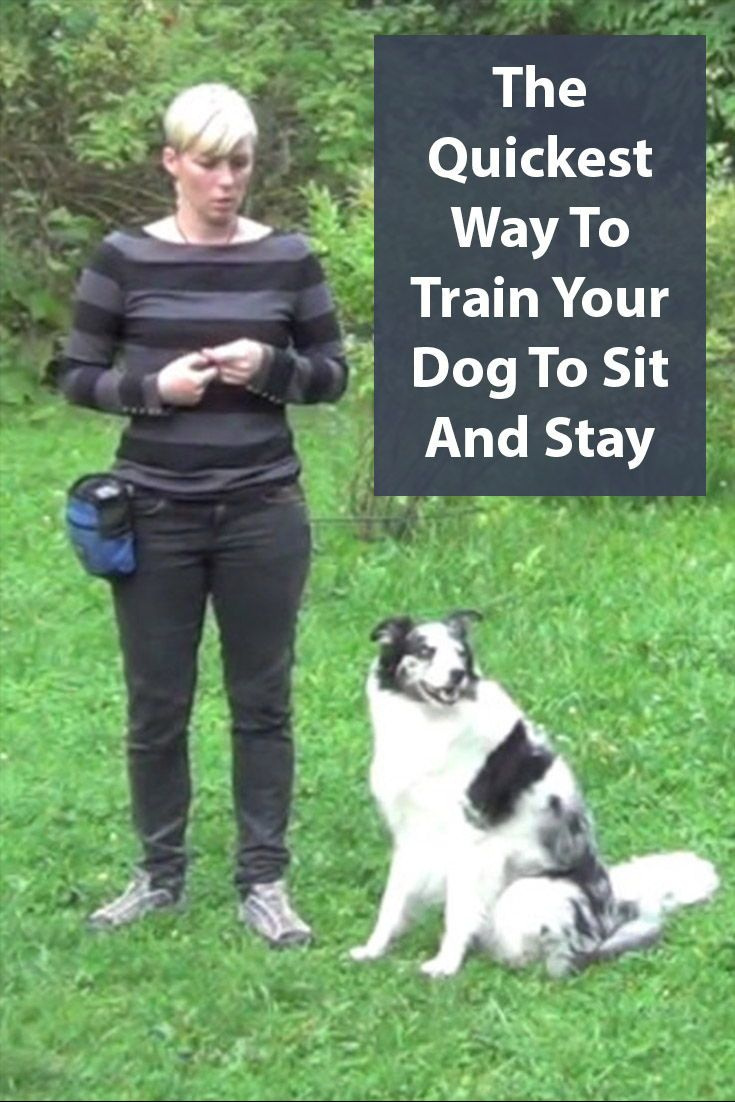 Teach Your Dog The Sit Stay Command A Step By Step Guide