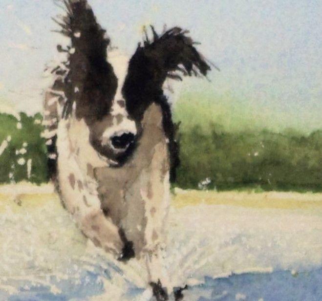 detail...........   Skye dog at Toogoom