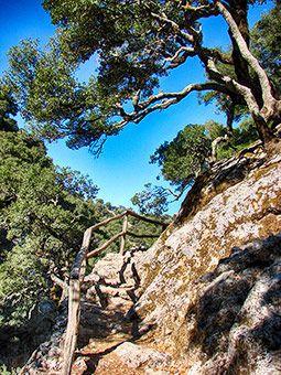 In the forest of Rouvas and the gorge of Agios Nikolaos #Crete http://cretazine.com/en/crete/travel-explore/crete-in-action/item/1459-walk-in-the-forest-of-rouvas