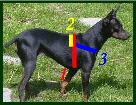 8 besten Selber machen Bilder auf Pinterest   Hunde, Schnittmuster ...