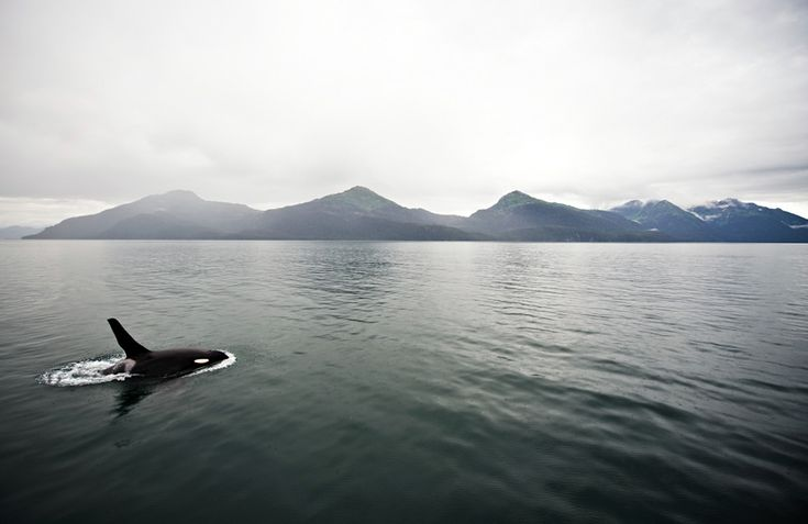 Prince William Sound, Valdez, Alaska - 2008 [Navid Baraty Photography]