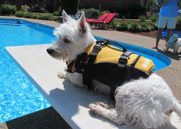 Doggy Flotation Life Jacket | Bagmyitem         This EzyDog Doggy Flotation Device (DFD) is the epitome of canine water safety and concurrent cuteness! It is brought to you by the thoughtful business endeavors of Ezy Dog. This is a red, high-performance doggy flotation vest. It features adjustable neoprene straps, which form an ergonomic, secure fit, reflective detailing to provide more efficient nighttime safety, durable (tough) construction so that it keeps up with the dog...