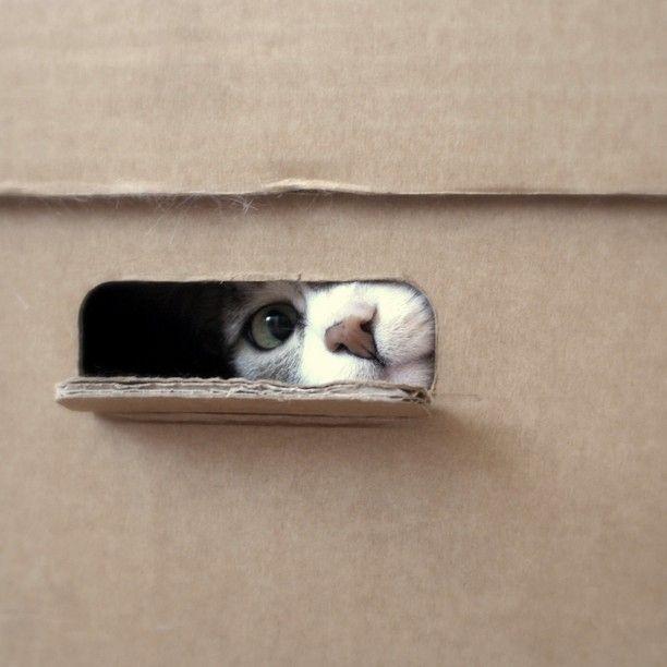 cute cat is traped in card board box    #sad
