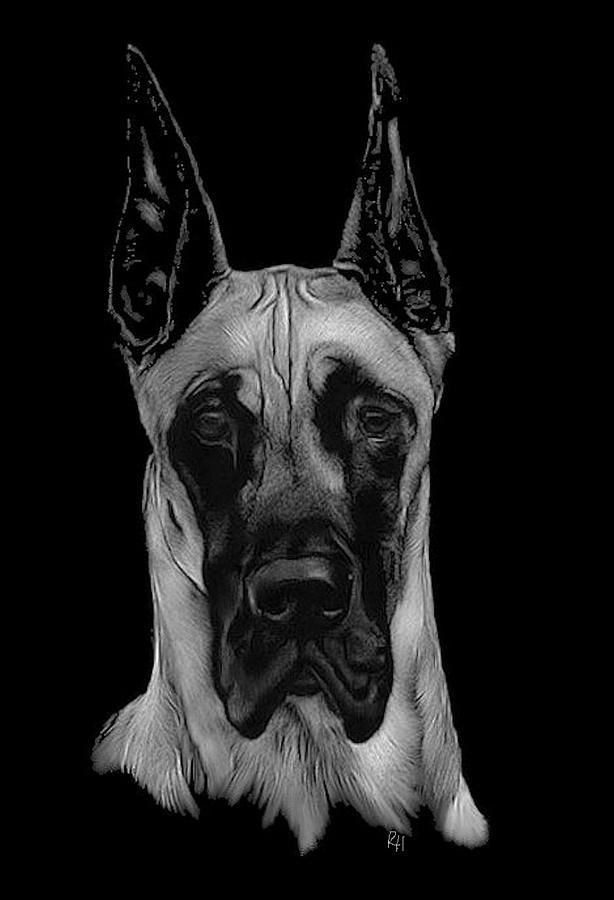 261 Best Great Danes Images On Pinterest  Great Danes -7901