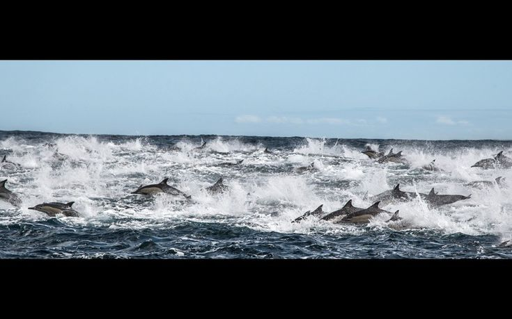Off the coast of Port Elizabeth, South Africa