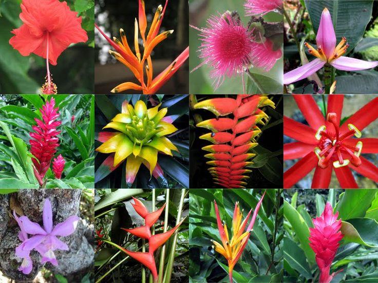 dica muito importante: não misture flores tropicais com flores europeias, pois não combinam entre si. As flores europeias são bem menores e com pétalas mais delicadas, enquanto as flores tropicais são maiores, mais fortes e imponentes. São flores europeias: rosas, tulipas, lírios, narcisos, jacintos, amores-perfeitos, frésias etc. São flores tropicais: hibiscos, strelitzia, orquídea, helicôneas, alpínias, bromélias etc.