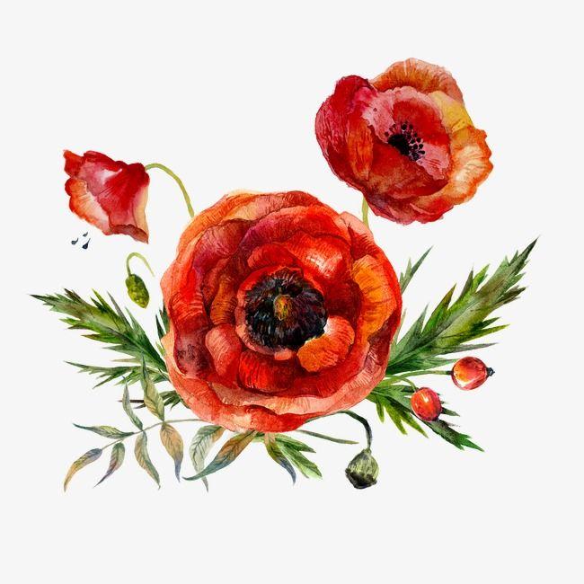 Watercolor Flowers Watercolor Clipart Red Png Transparent Clipart Image And Psd File For Free Download Amapolas Amapolas Rojas Tatuaje De Amapola Roja