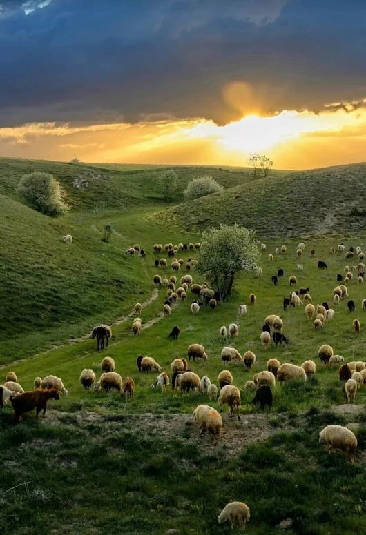 """Time to come back home!"" Ulukisla, Turkey by arif unsal"