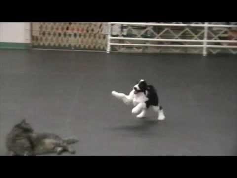 (2) Puppy vs cat (cute) - YouTube