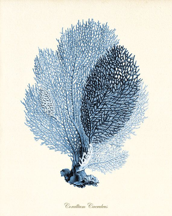 Queste bellissime illustrazioni sono da una serie di litografie di colore a mano. Sono da un libro di Belgio pubblicato nel 1800. Queste stampe sono digitalmente migliorate con alcuni inestetismi dispari a sinistra per migliorare lo sguardo antico.  -------------------------------------------------------------------------------------------  Per vedere altre stampe di corallo, mare e set di corallo, mare, consultare il link qui sotto…