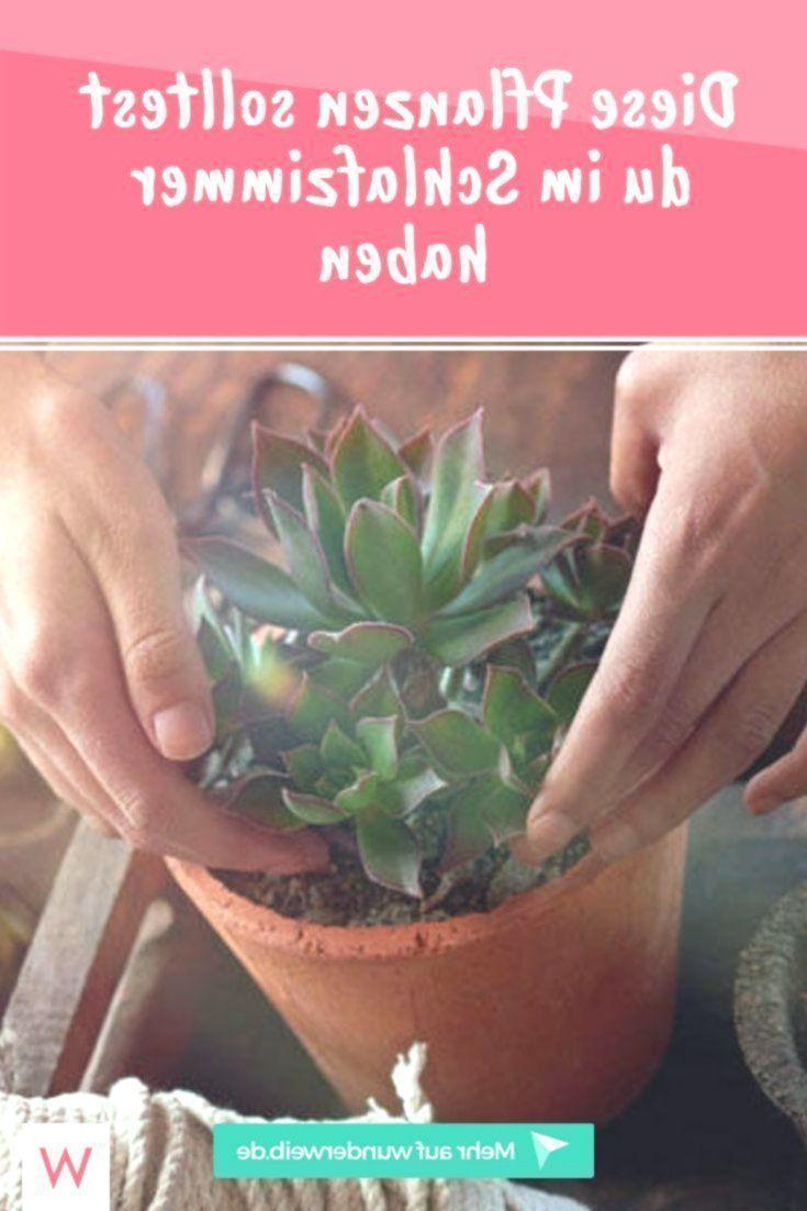 Diese Pflanzen Solltest Du Im Schlafzimmer Haben Wunderweib Das Magazin Das Diese Du Haben Im Magazin Pflanzen Schlafzimmer Solltest Wunderweib In 2020 Plants Health Blog Photo