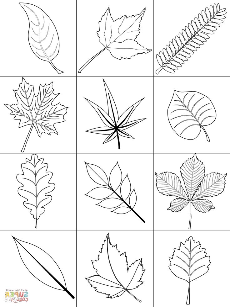 Fall Leaves Coloring Pages DWCP Autumn Leaves Coloring