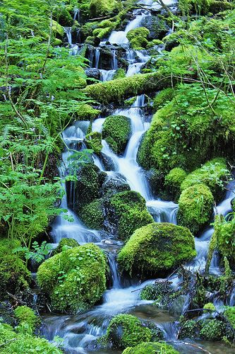Visit all of the National Parks - Mt. Rainier National Park