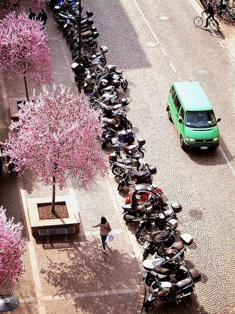 ♡ Prunus